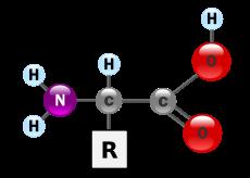 Informationen zur Gesundheit – MAP – Master Amino Pattern oder EAA – Essentielle Aminosäuren